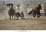Calf Roping beim Rodeo
